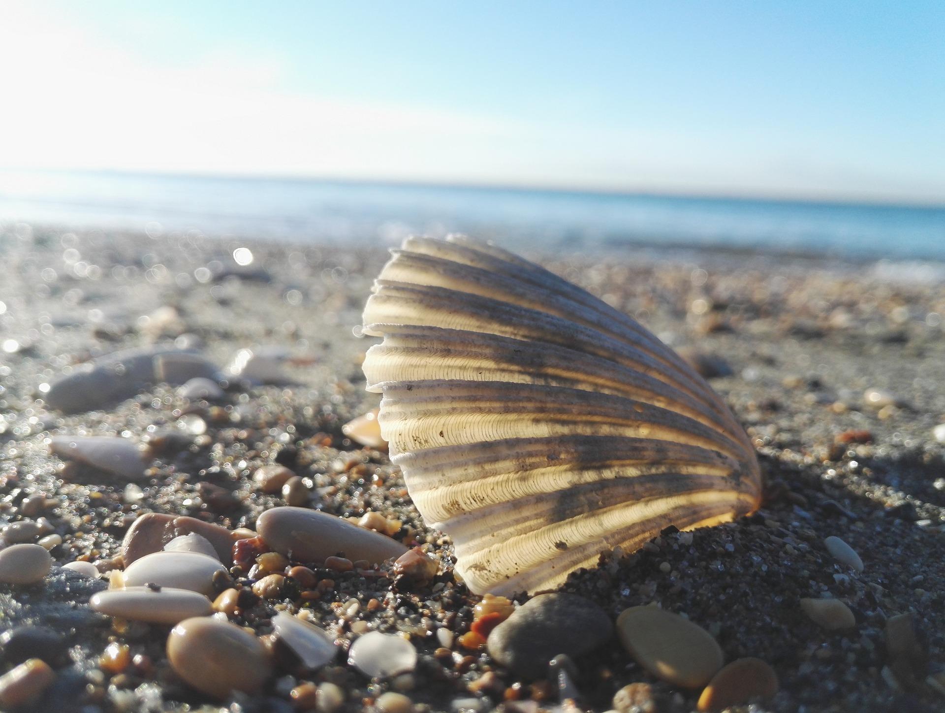 shell-2956899_1920